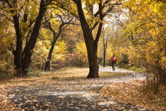 Bicyclist enjoys autumn ride along a winding path Royalty Free Stock Image