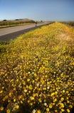 bicyclist kwiatu wiosna Obraz Royalty Free