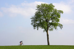Bicyclist passing a lonely tree Stock Images