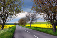 Bicyclist on a rural road in Slovakia Stock Images
