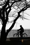The bicyclist and tree - silhouettes. Stock Photo