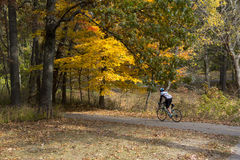 Bicyclist Urban Forest in Michigan Fall Stock Images
