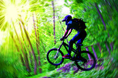 Bicyclist in wood Royalty Free Stock Images