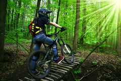 Bicyclist in wood Stock Image