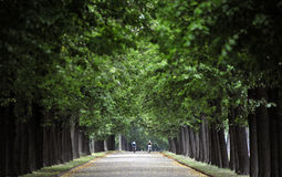 Bicyclists in a Cathedral of Trees. Two Bicyclists enjoy a ride through a lush, green parkway. A cathedral of trees surrounds them Stock Photography