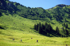 Bicyclists on the green slope Royalty Free Stock Photo