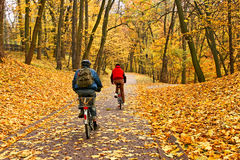 Bicyclists ride in park in falling season Stock Photos