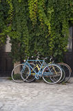 Bicyicles. Old bicycles parked under a wall of ivy Stock Image