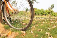 Bicykl i kwiaty na ziemi w jawnym parku Fotografia Royalty Free