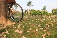 Bicykl i kwiaty na ziemi w jawnym parku Fotografia Stock