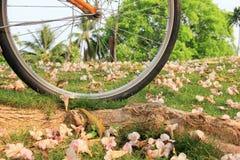 Bicykl i kwiaty na ziemi w jawnym parku Zdjęcia Royalty Free
