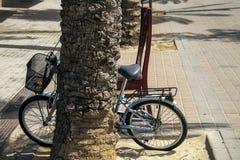 Bicykl odpoczywał na palmie wraz z krzesłem Fotografia Stock