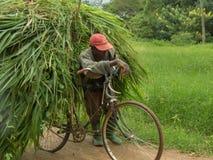 Bicykl overloaded z wielkim rozsypiskiem świeżo ciący słonia gra Obrazy Stock