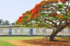 Bicykl pod ekstrawaganckim drzewem w podwórzu szkoła Obraz Royalty Free