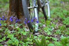 Bicykl stoi drzewem w lesie zdjęcie stock