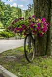 Bicykl uroczy kosz kwiaty Obrazy Royalty Free