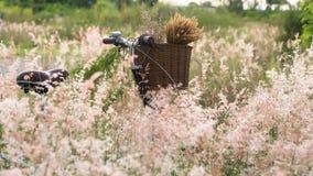 Bicykl z koszem Zdjęcie Stock