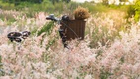 Bicykl z koszem Zdjęcia Stock