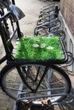 Bicykl z sztuczną trawą i kwiatami obraz royalty free