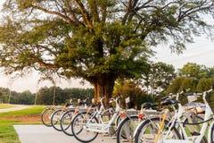 Bicykle dla czynszu przy miejscowego parkiem w miasteczku fotografia royalty free