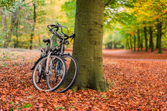 Bicykle przeciw drzewu w jesień lesie Zdjęcie Stock