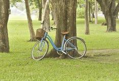 Bicyle σε τρία στον κήπο Στοκ Φωτογραφία