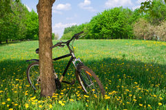 bicyle Fotografia Royalty Free