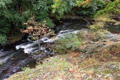 Bidad krökning av floden Royaltyfri Foto