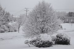 Biddeford Maine Winter wonderland new england. A winter storm leaving behind fresh snow covered trees, fields, and roads in Biddeford Maine in black and white stock photography