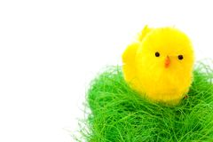 Biddy in easter basket Royalty Free Stock Photos