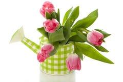 Bidon d'arrosage avec des tulipes Image libre de droits
