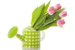 Bidon d'arrosage avec des tulipes Images stock