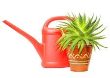 Bidon d'arrosage et plante verte Photos stock