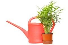 Bidon d'arrosage et plante verte Photographie stock