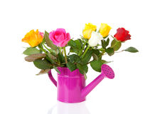 Bidon d'arrosage rose avec les roses colorées Photographie stock libre de droits