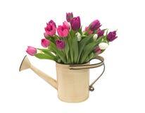 Bidon d'arrosage rustique complètement de tulipes Photos libres de droits