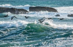 Bids Flying over Sea Waves during Daytime Royalty Free Stock Images