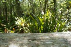 Bidsprinkhanen bij het Heiligdom van het Kurketrekkermoeras Stock Afbeelding