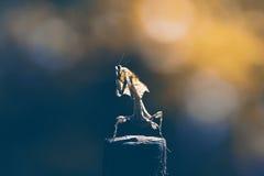 bidsprinkhanen, dieren, macro Royalty-vrije Stock Foto's