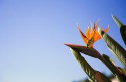 Bidsprinkhanen en bloem over een blauwe hemel royalty-vrije stock foto
