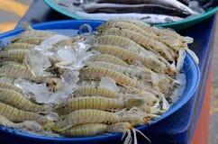 Bidsprinkhanengarnalen (Harpiosquilla-raphidea) Royalty-vrije Stock Foto's