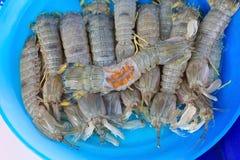 Bidsprinkhanengarnalen (rivierkreeften) in verse zeevruchtenmarkt Stock Foto