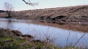 Bieżąca mała rzeka zbiory