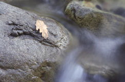 bieżącej wody. Zdjęcia Stock