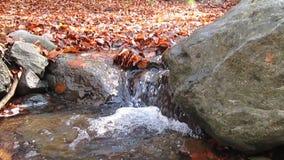 Bieżący strumień zbiory
