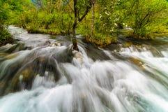 Bieżący strumień w Jiuzhaigou parku narodowym, Sichuan, Chiny obraz royalty free