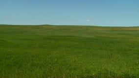 Bieżący trawa krajobrazu timelapse zbiory