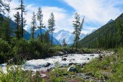 Bie??ca lasowa halna rzeka Akkem rzeka w Belukha parku narodowym altai dzie? trwa? g?ry lato siberia Rosja obrazy stock