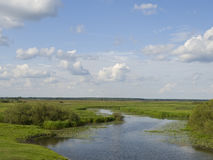 Biebrza. Flood plain of the Biebrza river in Poland royalty free stock image