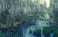 Biebrza flodnationalpark, Polen royaltyfria foton